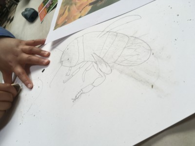 Het ontstaan van de tekening van een bij met potlood